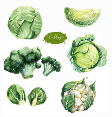 Hand-drawn watercolor food illustrations. Isolated drawings of the fresh vegetables - cabbage, cauliflower, brussels sprouts and broccoli