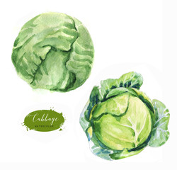 Hand-drawn watercolor food illustration. Green fresh cabbage isolated on the white background