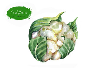 Hand-drawn watercolor food illustration. Green fresh cauliflower isolated on the white background