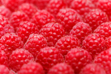 many raspberry berries isolated on white
