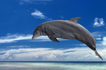 common dolphin jumping outside the ocean in the blue