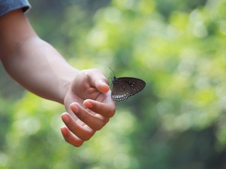 Butterfly on hand, blurred background, natural view And green trees