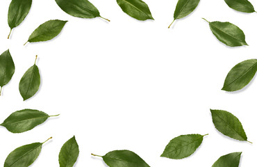 Fresh green leaves composition. Frame of leaves isolated on white background. Top view, flat lay