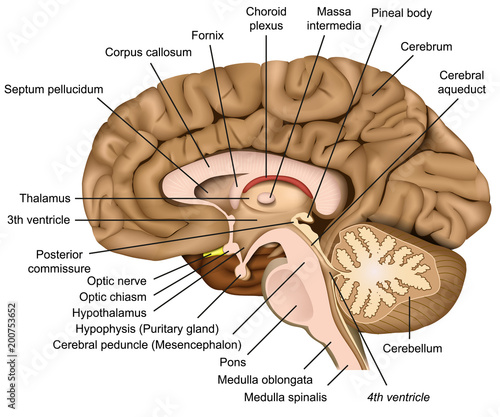 brain parts and functions pdf