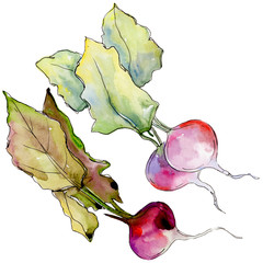 Radish wild vegetables  in a watercolor style isolated. Full name of the fruit: Radish. Aquarelle wild vegetables for background, texture, wrapper pattern or menu.