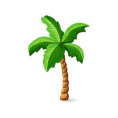 Palm tree in cartoon style isolated on white background. Vector Illustration.
