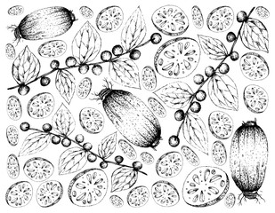 Hand Drawn Background of Lotus Root and Jackal Jujube Fruits