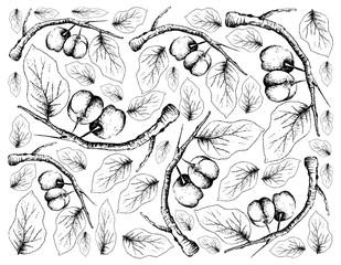 Hand Drawn Background of Fresh Acerola Cherries