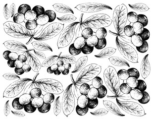 Hand Drawn Background of Fresh Acai Berries