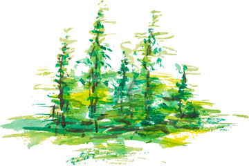 Watercolor group of fir trees green forest landscape, Drawing on white isolated background. Eps 10 vector illustration for your design,