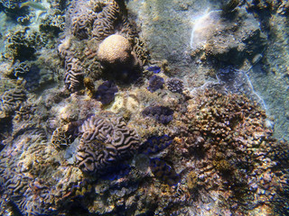 Coral reef in north Sulawesi
