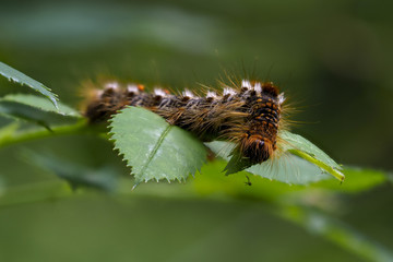 caterpillar on a green leaf