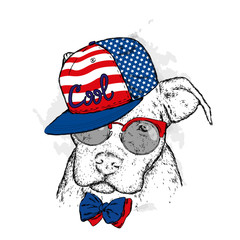 A pedigreed dog with glasses and a cap. Pitbull. Vector illustration.