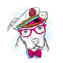 A pedigreed dog with glasses, a tie and a cap. Pitbull. Vector illustration. Captain, sailor.