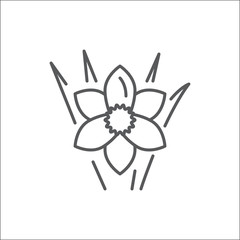 Narcissus editable line icon - beautiful spring flower pixel perfect vector illustration isolated on white background.
