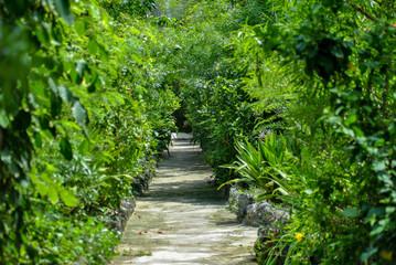 Tropical bungalow sidewalk