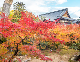 Colorful leaves in Japan autumn