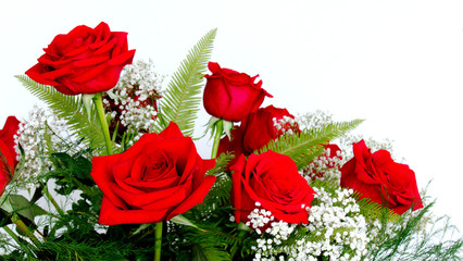 Beautiful Red Roses - Rosaceae Rosoideae Rosa - and White Baby's Breath for Valentines Day