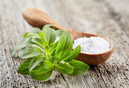 Stevia plant with powder
