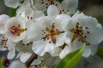 Fruhling Winter Erste Blumen Wetter Insekten Deko Buy This
