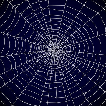 Spider web background - vector