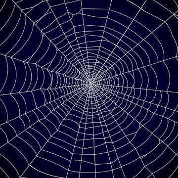 Spider web background - vector