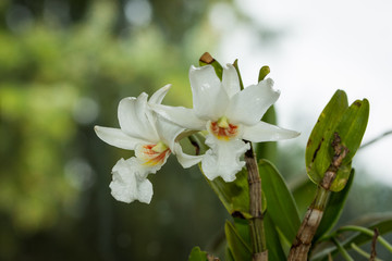 Orchideen, Eidechsen, Frühling, und mehr