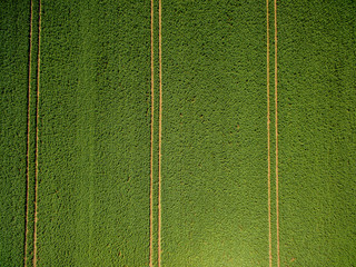 Feld mit Spuren