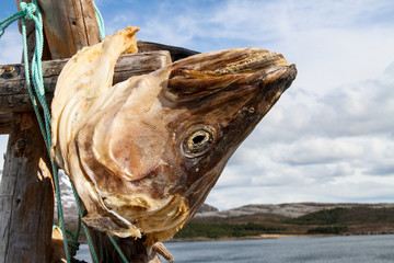 Dried fish head - cod