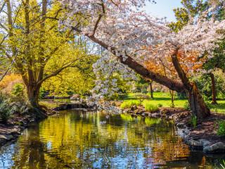Springtime blossom in public Beacon Hill Park, Victoria BC Canada
