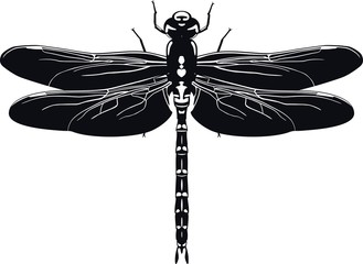 Black silhouette of dragonfly on white background. Vector illustration