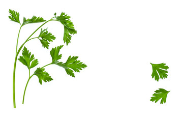 garden parsley leaves and stalks on white background with copy space