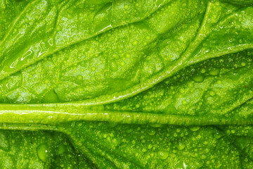 spinach macro photo / macro photo large sheet spinach natural texture