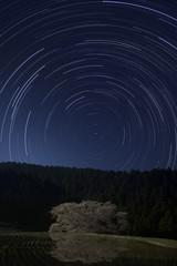 桜の古木と星空のイメージ