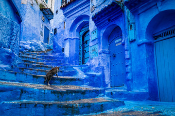 Deurstickers A cat climbs stairs on a blue painted street in the medina of Chefchaouen in Morocco