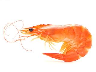 Shrip