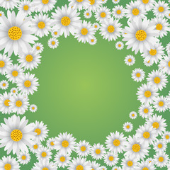 Spring background with falling chamomile on green background. Vector.