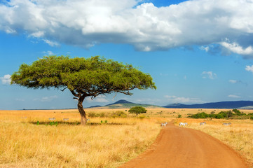 Wall Murals Blue Landscape with nobody tree in Africa