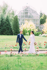 Lovely walk of the cheerful newlyweds behind the rose bushes at the blurred background of the greenhouse.