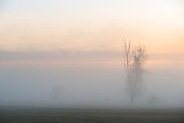 Wiosenny świt. Drzewa we mgle - fototapety na wymiar