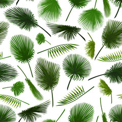 Vector seamless pattern of colorful palm leaf on white background. Tropical palm leaves background