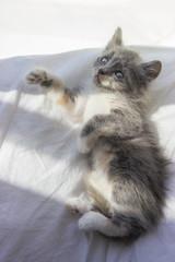 Young kitten relaxing.