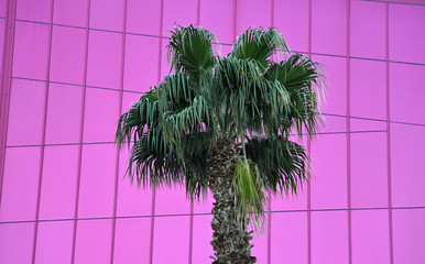 Palm tree in front of pink building facade