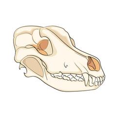 Object on white background skull dog sideways. Color background raster