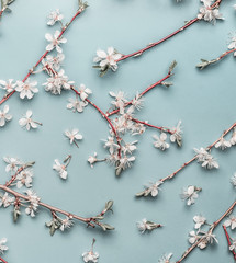 Turquoise blue square spring background with cherry twigs and blossom, top view, flat lay. Creative springtime layout