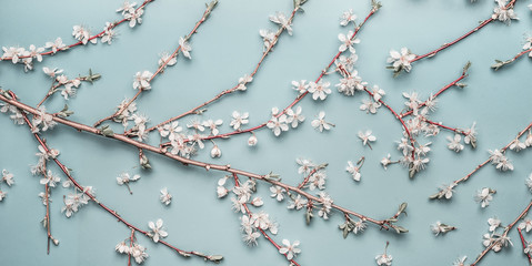 Wall Mural - Turquoise blue Spring background with cherry twigs and blossom, top view, flat lay. Creative springtime layout, banner or template