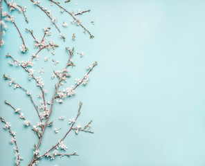 Turquoise blue background with spring  cherry blossom branches, top view, flat lay. Creative springtime layout