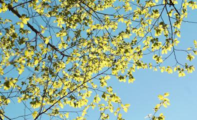 цветы и деревья весной есть место для надписи