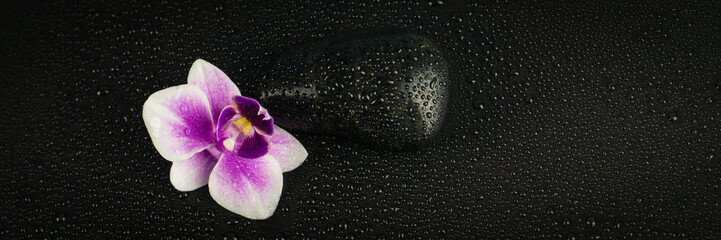 Pink orchid with black stone and water drops on black background