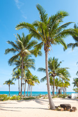 Fototapete - Landscape of coconut palm tree on tropical beach in summer. Summer background concept.